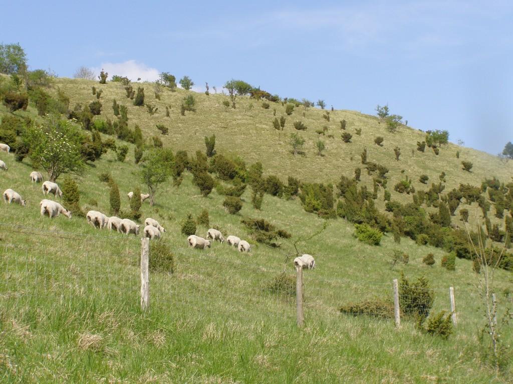RNN de la grotte et des pelouses d'Acquin- Westbécourt et des coteaux de Wavrans-surl'Aa, et coteau d'Elnes (Photo : CEN)