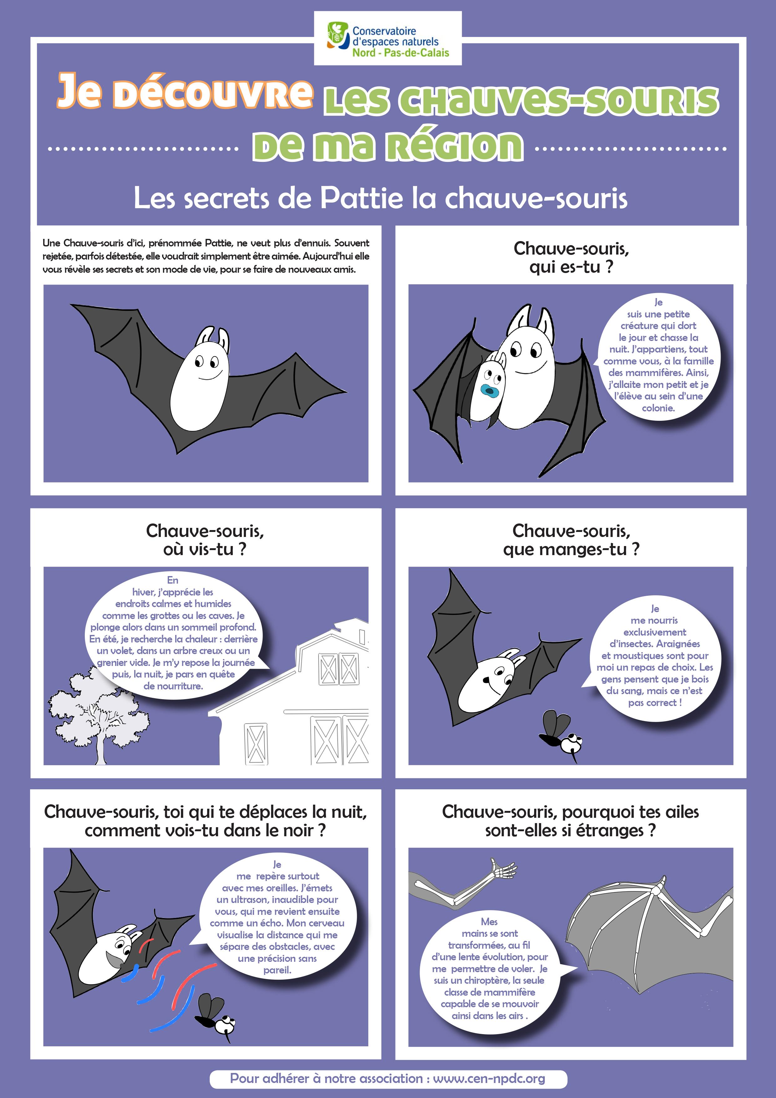 Avec ce premier numéro dédié aux chauves-souris, le CEN met à l'honneur la vulgarisation scientifique