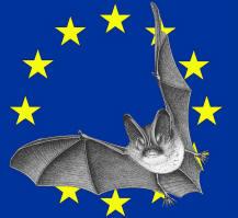 Dans la région, le Conservatoire d'espaces naturels du Nord et du Pas-de-Calais, en partenariat avec la Coordination mammologique du Nord de la France (CMNF) propose de vous faire découvrir l'univers discret de ces mammifères fascinants