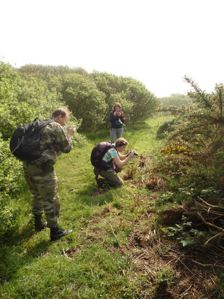 Journée de prospection sur le terrain, avec des bénévoles encadrés par des chargés d'études du CEN (Photo : Élise Tremel)