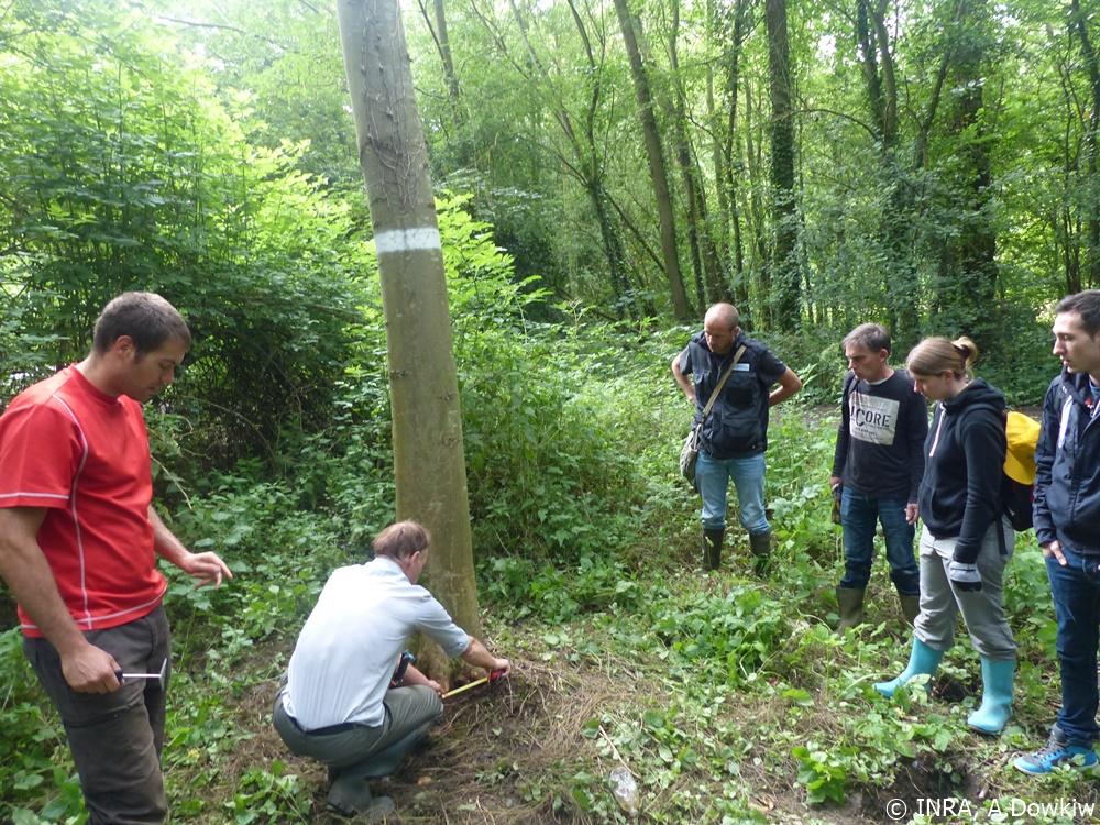 Participation des bénévoles du CEN au programme de recherche INRA sur la Chalarose du frêne - Photo : © INRA, Arnaud Dowkiw