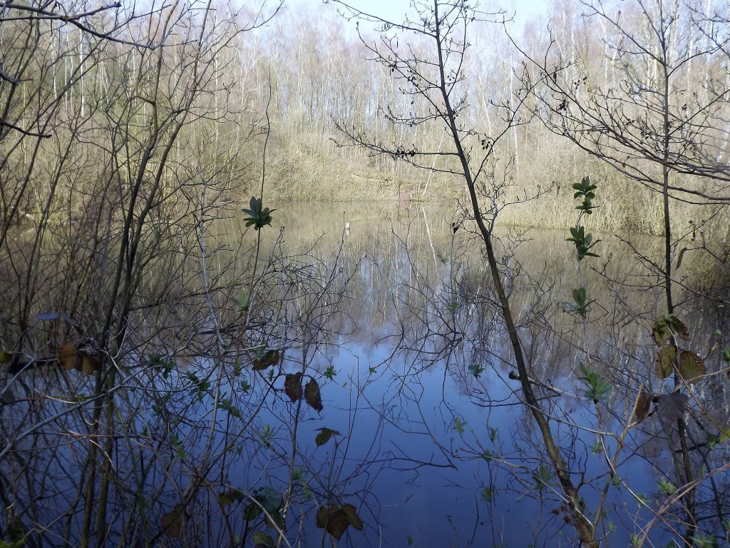 """""""Les traces du passé au bois de la Louvière"""" par Josiane Deville ; au sein du Bois de la Louvière."""