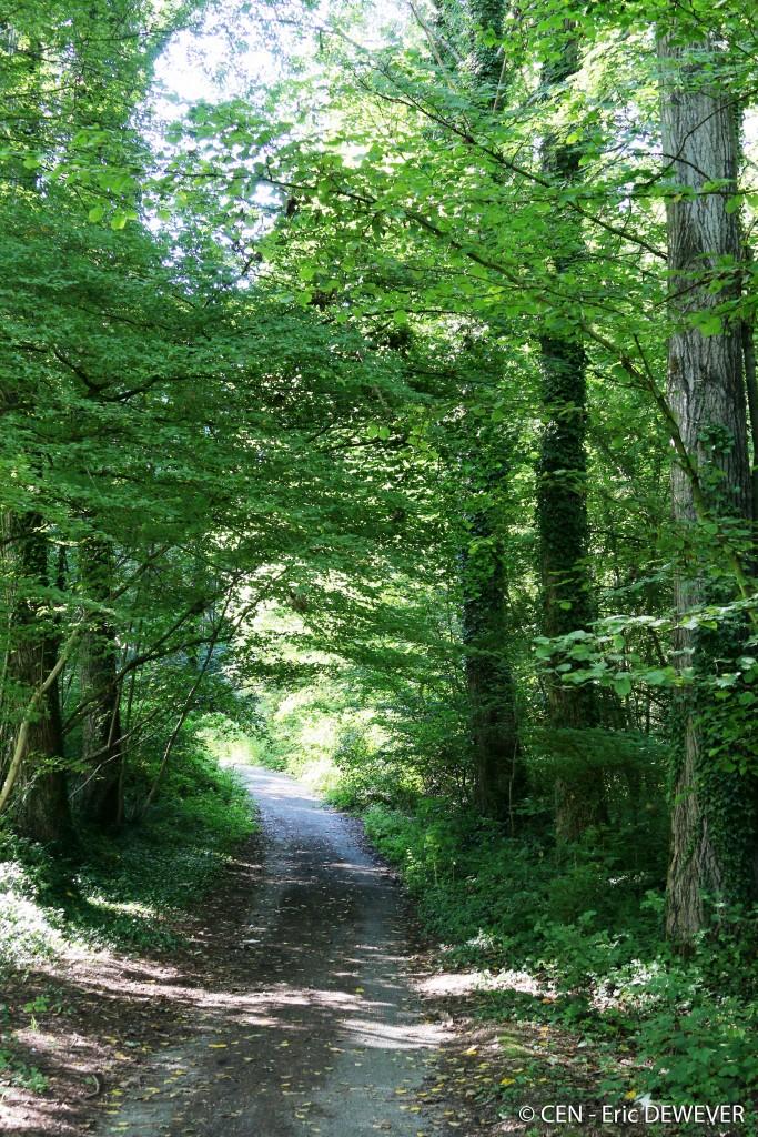 Bois de la Louvière à Lapugnoy (62) - Photo : E. Dewever