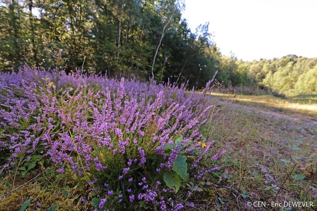 Le site a plusieurs facettes et offre des paysages variés - Photo : E. Dewever