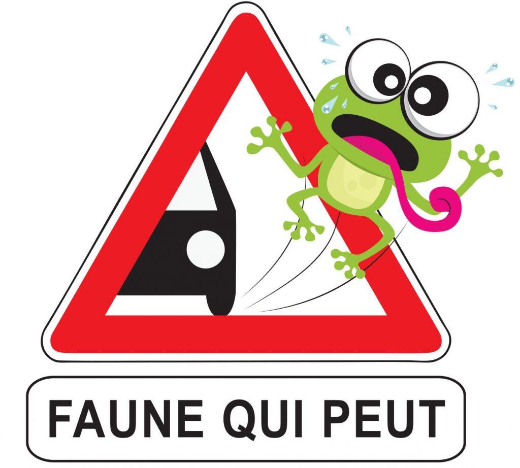 Faune qui peut : une science participative qui recense la faune sauvage sur les routes du Nord Pas-de-Calais