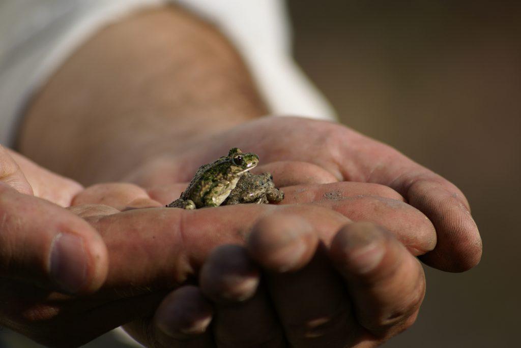 Protégeons les amphibiens !