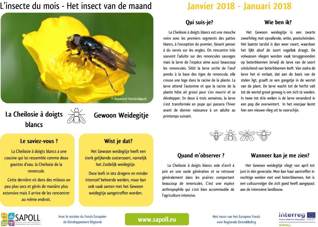 SAPOLL - Fiche insecte du mois - janvier 2018