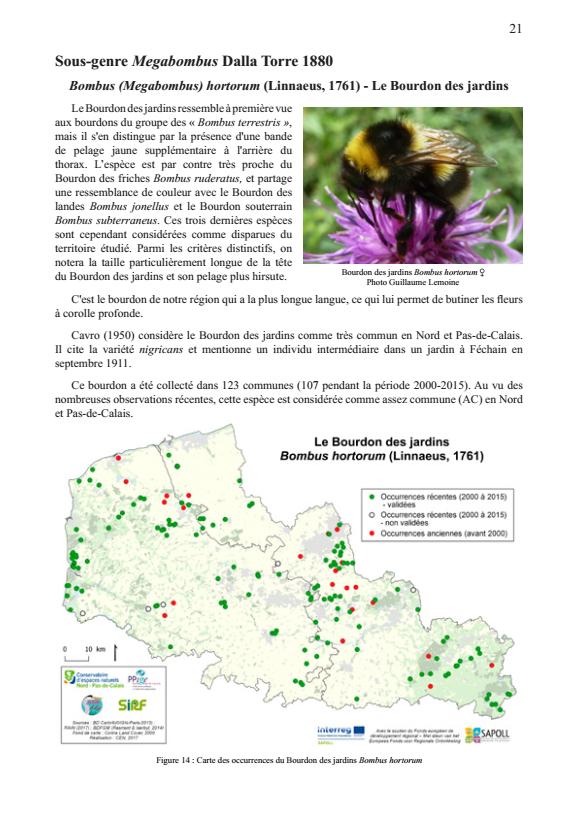 Atlas préliminaire des bourdons du Nord et du Pas-de-Calais : Bombus hortorum