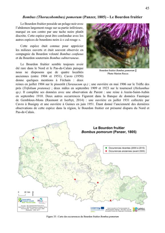 Atlas préliminaire des bourdons du Nord et du Pas-de-Calais : Bombus pomorum